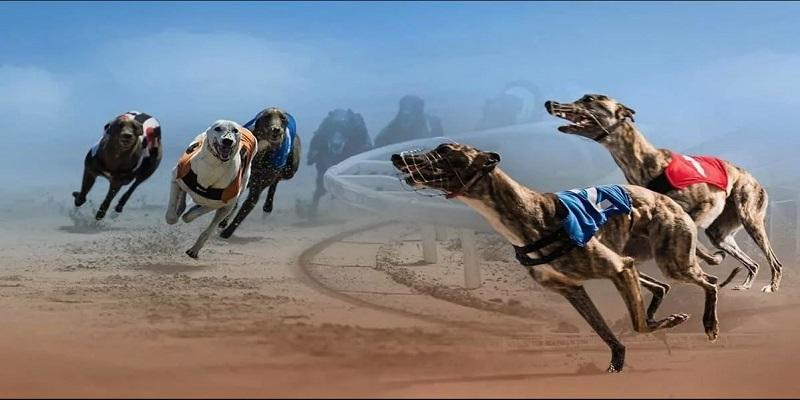 Mẹo chơi đua chó không nên bỏ qua