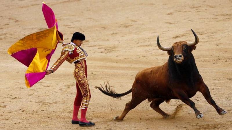 Bull Fight là bài gì? Hướng dẫn chơi Bull Fight trên 188BET